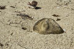 DryTortugas_164 (rvogt0505) Tags: drytortugasnationalpark nationalpark drytortugas florida beach sand shell