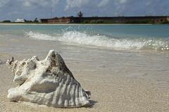 DryTortugas_161 (rvogt0505) Tags: drytortugasnationalpark nationalpark drytortugas florida beach sand shell