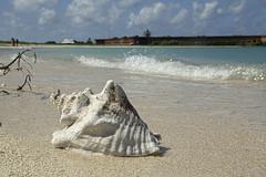 DryTortugas_160 (rvogt0505) Tags: drytortugasnationalpark nationalpark drytortugas florida beach sand shell