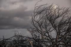 DryTortugas_124 (rvogt0505) Tags: drytortugasnationalpark nationalpark drytortugas florida sunset beach ocean