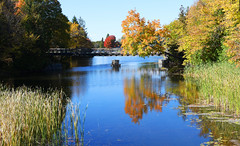 The Golf Cart Bridge (Anthony Mark Images) Tags: fairhavens goldcartbridge bridge reeds cattails lilypads reflections water trentcanal leaveschanging fall autumn changingleaves coloursoffall canada ontario kawarthalakes red orange nikon d850 flickrclickx
