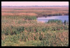 2001-11 R01 012 (kccornell) Tags: swamp marsh coast rutherford beach louisiana november 2001 color slide film e6 nikon fe2 35mm