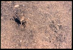 2001-11 R01 004 (kccornell) Tags: crab coast rutherford beach louisiana november 2001 color slide film e6 nikon fe2 35mm