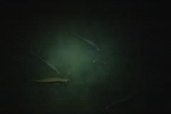 DryTortugas_141 (rvogt0505) Tags: drytortugasnationalpark nationalpark drytortugas florida night tarpon fish