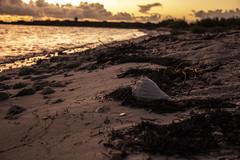 DryTortugas_133 (rvogt0505) Tags: drytortugasnationalpark nationalpark drytortugas florida sunset beach shell sand