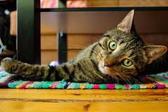 Mittens arch (JaaniicB) Tags: canon eos lens mm mittens cat green eyes ears sleepy sleeping lv riga 1200d