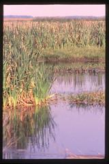 2001-11 R01 017 (kccornell) Tags: swamp marsh coast rutherford beach louisiana november 2001 color slide film e6 nikon fe2 35mm