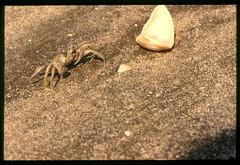 2001-11 R01 005 (kccornell) Tags: crab coast rutherford beach louisiana november 2001 color slide film e6 nikon fe2 35mm
