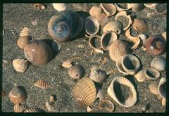 2001-11 R01 002 (kccornell) Tags: seashells coast rutherford beach louisiana november 2001 color slide film e6 nikon fe2 35mm