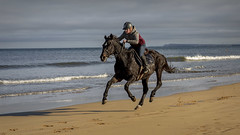 The Gallop (Alan10eden) Tags: horse gallop shore sea coast sun sunshine october racing jockey bluesky benone beach countylondonderry sand fast running equine animal ulster alanhopps canon 5dmkiv northernireland saddle bridle waves breakers ocean northcoast training