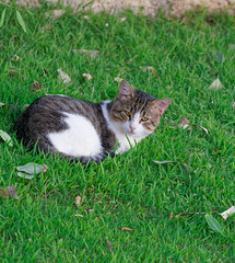 2019-09-21_18-05-49_ILCE-6500_DSC09843_DxO (miguel.discart) Tags: 2019 202mm animal animalphotography animals animalsupclose animaux belek cat cats chat chats createdbydxo dxo e18135mmf3556oss editedphoto focallength202mm focallengthin35mmformat202mm holiday hotel hotels ilce6500 iso800 limakarcadia nature naturephotography pet sony sonyilce6500 sonyilce6500e18135mmf3556oss travel turkey turquie vacances voyage
