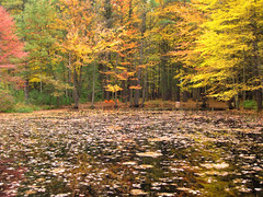 The north shore (Bruces 51) Tags: whiting forest dow gardens midland michigan lake margardor