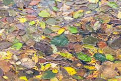 Hennepin Canal Jambalaya (114berg) Tags: 02nov19 hennepin canal fall colors geneseo illinois
