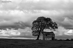 Drystone Barn and Trees, Derbyshire (Nigel Blake, 18.5 MILLION views! Many thanks!) Tags: drystone barn tree lonetree derbyshire uk landscape