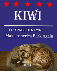 Kiwi For President (Rusty Russ) Tags: kiwi president bark dog political politics vote write colorful day digital flickr country bright happy colour scenic america world sunset sky red nature blue white tree green art light sun cloud park landscape summer old new photoshop google bing yahoo stumbleupon getty national geographic creative composite manipulation hue pinterest blog twitter comons wiki pixel artistic topaz filter on1 sunshine image reddit tinder russ seidel facebook timber unique unusual fascinating