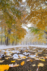 Autumn and Winter Collide (Symbiosis) Tags: fall fallcolors moraineviewstatepark dawsonlake snow centralillinois illinois enjoyillinois