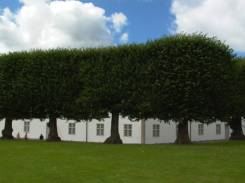 Trees Forming Large Hedge