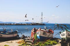 Bulgaria (Pomorie) (JaaniicB) Tags: canon eos birds seagull seagulls bulgaria pomorie neptune bar beach sigma 1750 f28