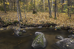 Around The Bend (Kevin Tataryn) Tags: creek river stream water flow longexposure rocks stones woods forest leaf leaves trees fall autumn october landscape nikon d500 zeiss milvus 1828 nature hudson quebec canada