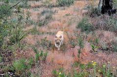 a walk in the bush (holly hop) Tags: bush trees australia nature victoria grey cat wildcat rupert bertie ginger