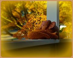 Orange (CAJC: in the PNW) Tags: hss sliderssunday happysliderssunday orange fallcolors householdgoods squash alittleclayelephantinprimitivestyle autumn fallinseattle seattlewa seattleautumns homelyscenes ipiccy sonyrx100m5 ipiccyartisticeffect ipiccyframes lightroomclassic