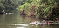 paz (rraass70) Tags: canon d700 rio agua ninbinh deltadelriorojo vietnam