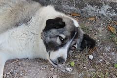 A friend (Argyro Poursanidou) Tags: stray animal dog faua natule colorful black white protection φύση σκύλοσ αδέσποτο ζώο προστασία