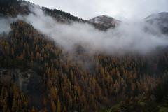 Unterengadin • Engiadina Bassa • Lower Engadine (2) (Toni_V) Tags: m2402577 rangefinder digitalrangefinder messsucher leicam leica mp typ240 type240 35lux 35mmf14asphfle summiluxm hiking wanderung randonnée escursione alps alpen unterengadin engadin engiadinabassa fog nebel mist herbst autumn graubünden grisons grischun switzerland schweiz suisse svizzera svizra europe ardez ardeztaraspscuol landscape landschaft lärchen ©toniv 2019 191102