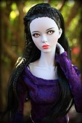 Purple (wizgerg3) Tags: raccoondoll gene shy shyama