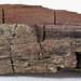 Fossil maple wood (Upper Pleistocene)