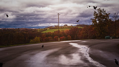Blacktop (mpalmer934) Tags: parking lot trees autumn raves crows leaves sky clouds