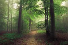 Forest Path (Netsrak) Tags: baum bäume eu europa europe landschaft natur nebel wald fog landscape mist nature tree trees woods rheinbach nordrheinwestfalen deutschland