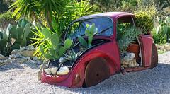 Atlantis Cactus Park (hans pohl) Tags: portugal zambujal sesimbra voitures cars plantes plants abandonné abandoned nature cactus