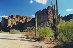 Saguaro (John Rosemeyer) Tags: arizona desert saguaro cactus