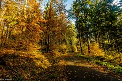 Das war der goldene Oktober (Andi Fritzsch) Tags: herbst herbst2019 autumn autumn2019 natur nature naturephotography landschaft landscape landscapephotography erzgebirge oremountains sachsen saxonia wald forest baum tree trees nilkon nikond7100 sigma sigma1020mm flickerunited flickerunitedaward