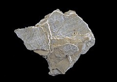Loughlinite (Ron Wolf) Tags: earthscience geology greenriverformation loughlinite mineralogy rwpc crystal fibrous macro mineral nature orthorhombic phyllosilicate rare typelocality wyoming