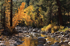 Autumn Foliage and West Walker River, Mono County, CA (4 Corners Photo) Tags: 4cornersphoto autumn boulder deciduous fall foliage forest landscape leaves monocounty mountains nature northamerica outdoor reflection rural scenery sierranevada toiyabenationalforest tree unitedstates water westwalkerriver bridgeport california unitedstatesofamerica