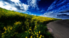 In skies of dreamy blue we played all day in the meadow grass of yesterday (Alfred Grupstra) Tags: nature ruralscene sky landscape road cloudsky outdoors blue summer field scenics greencolor agriculture sunlight nonurbanscene cloudscape hill land nopeople beautyinnature