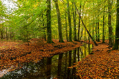 Autumn | Herfst Leuvenum (Leo Kramp) Tags: web beek data leokrampfotografie leuvenumsebossen herfst manfrotto410juniorgearedhead wwwleokrampfotografienl accessoires photography gitzogt3542ltripod jaargetijden natuurfotografie plaatsen 2019 2010s nederland accessoiries autumn naturephotography netherlands places hulshorst gelderland