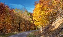 Forest autumn colors (Torok_Bea) Tags: mountain autumn oktober október ősz beautiful color autumncolor nikon nikond7200 d7200 nikon1680mm landscape wonderful awesome amazing forest erdő kirándulás túra hike autumnlandscape lovely lovenatur natur nature nationalpark nikon1680 naturlover nikond autumnforest autumncolours