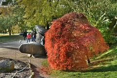 Autumn Acer (Bri_J) Tags: chatsworthhousegardens bakewell derbyshire uk chatsworthhouse chatsworth statelyhome gardens hdr nikon d7500 autumn fall tree acer leaves orange