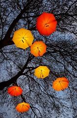 Equally but still different Color! (johanssoneva) Tags: fotosöndag fotosondag photosunday fs191103 likamenändåolika equallybutstilldifferent träd tree paraply umbrella gult yellow ljus light liseberg nöjespark amusementpark färg color halloween