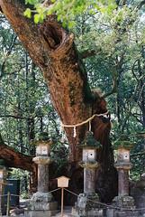 (Kkeina) Tags: film analog manual 35mm 50mm olympus om om1 japan nara nature green park trees