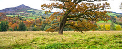 Wonderful Autumn in Wicklow - Towards the Sugar Loaf (sineid2009) Tags: fall autunm leaves trees wicklow ireland powerscourt colours