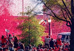 2019.11.02 Washington Nationals Victory Parade, Washington, DC USA 306 61057