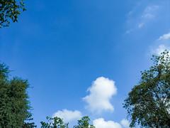 Saigon, November 03 2019 (Michael LeHai) Tags: morning blue sky tree green vietnam saigon mobilephotography clouds cloud
