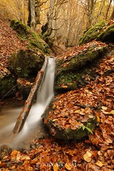 Valle de Sajambre (Jose A. Casal) Tags: otoño2019picosdeeuropa valle de sajambre leon