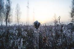 Scenic landscape with sunrise on a frosty autumn morning. (ivan_volchek) Tags: autumn background beautiful blue bridge bright clear cold country countryside dawn day field finland foggy frost frosty grass grassland haze hoarfrost idyllic landscape light mist misty morning natural nature outdoor peaceful pure rural scene scenery season sky snow sun sunlight sunny sunrise sunset tranquil trees vegetation weather white winter