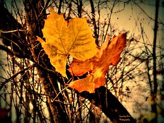 Golden Autumn (Lana Pahl / Country Star Photography) Tags: sliderssunday