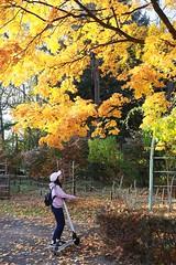 SAKURAKO - Autumn color of leaves. (MIKI Yoshihito. (#mikiyoshihito)) Tags: japan sakurako 櫻子 さくらこ 娘 daughter サクラコ 長女 11歳 eldestdaughter 電動キックボード 電動キックスケーター キックスケーター キックボード